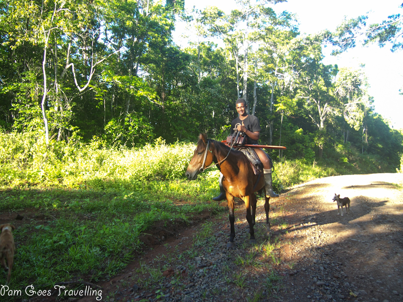 Local horse rider in Fiji to collect woods