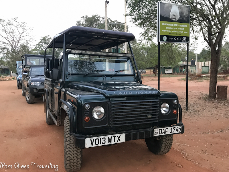 Morning Game Drive at Yala National Park