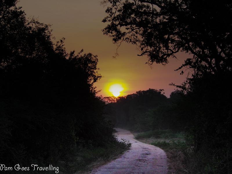 Sunrise at Sri Lanka Safari experience