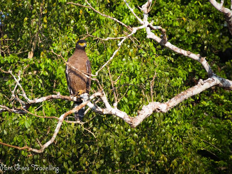 Bird at Yala National Park