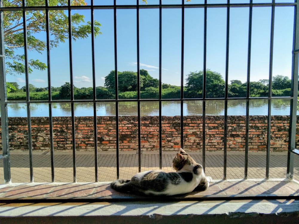 Cat in Mompox